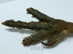 Sterling Silver Bird Rooster Chicken Foot Claw Victorian Letter Opener Knife
